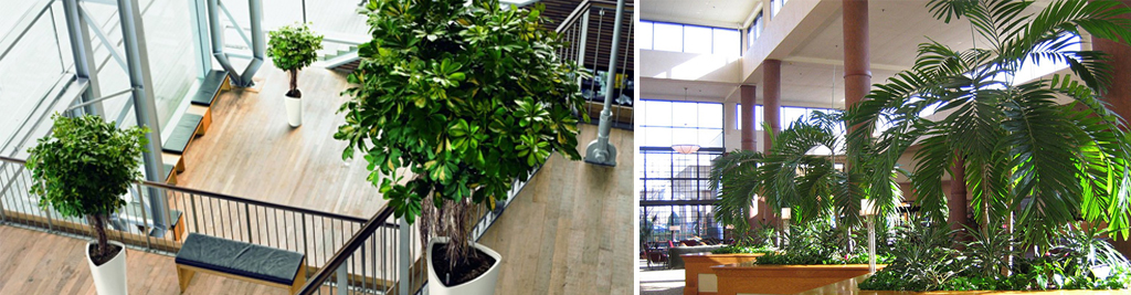 Interior Plants And Floristry Benchmark Grounds Maintenance